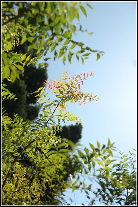 03_發紅的樹葉