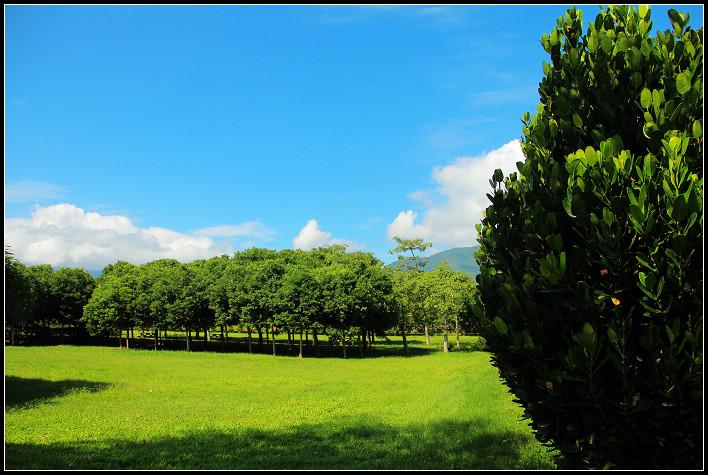 10_樹林