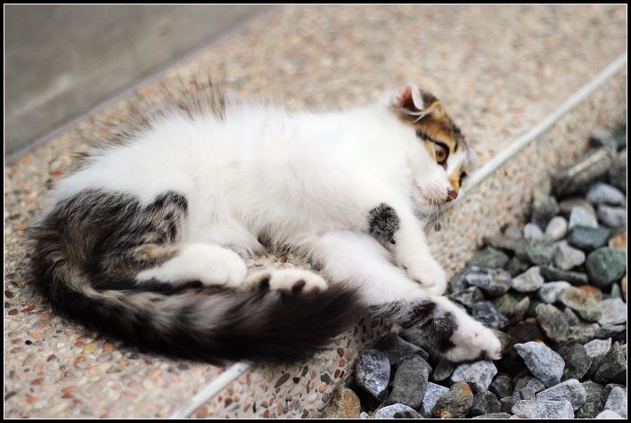 12_貓尾巴的喵