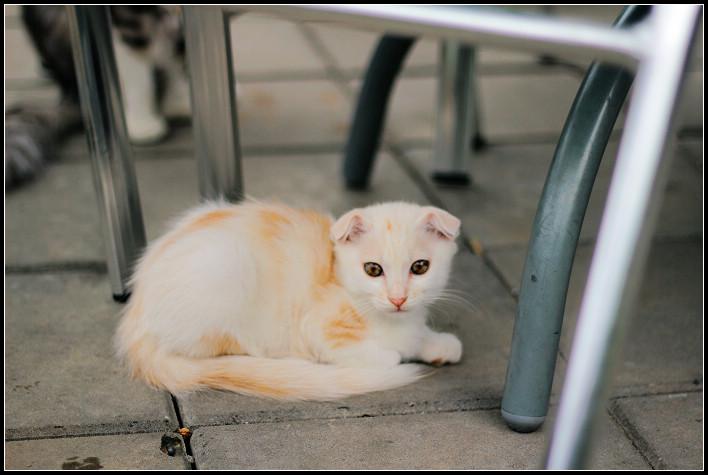 14_貓尾巴的喵