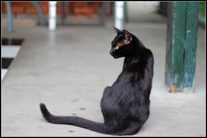 15_貓尾巴的喵