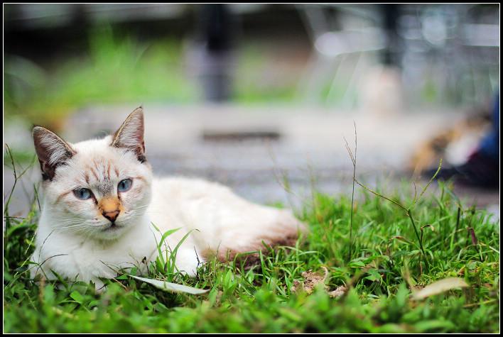 25_貓尾巴的喵
