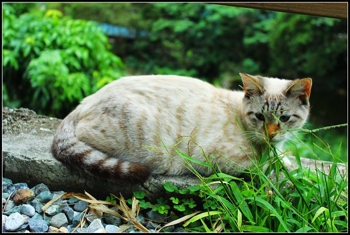 29_貓尾巴的喵