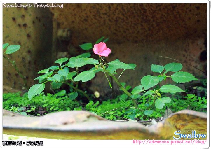 52_遊園路線_生長在鏟車大鏟內的小花