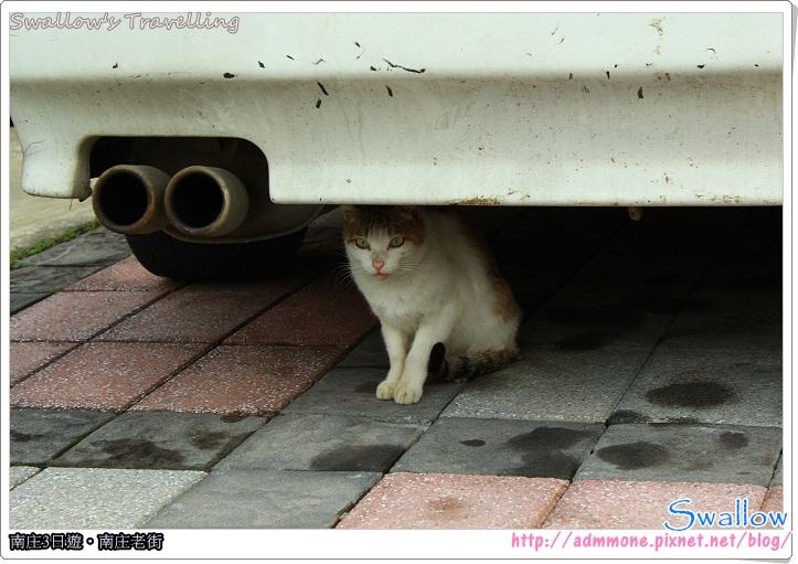 36_在車底的小貓