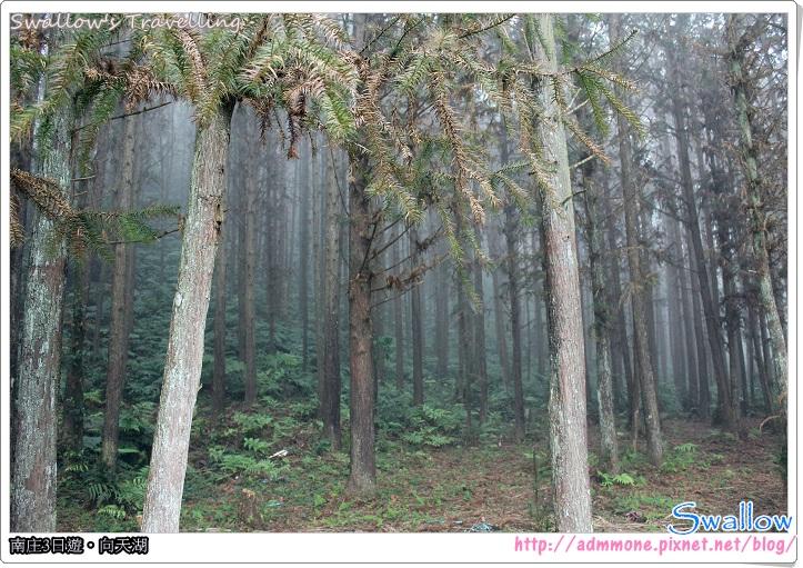 03_霧氣瀰漫的森林