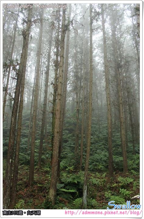 04_霧氣瀰漫的森林