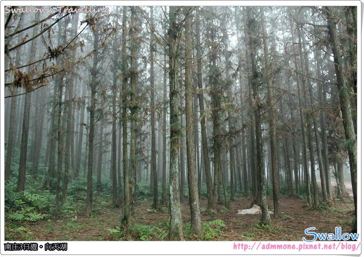 05_霧氣瀰漫的森林
