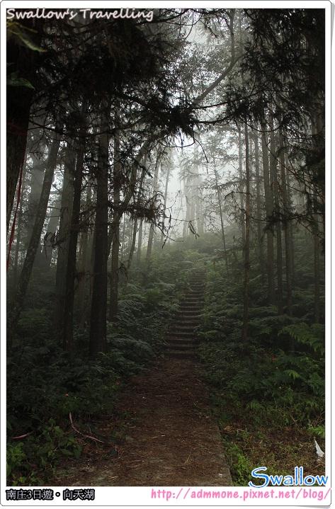06_霧氣瀰漫的森林