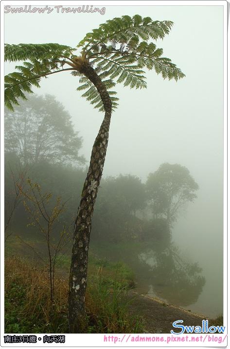 08_霧氣瀰漫的水面