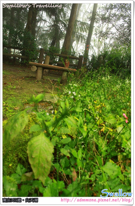 09_霧氣瀰漫的森林