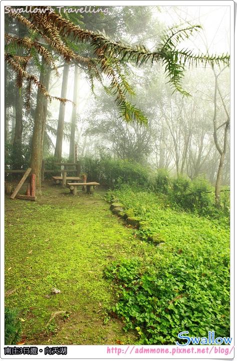 10_霧氣瀰漫的森林