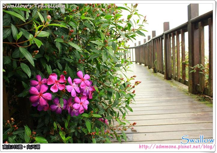 16_路邊的心型花