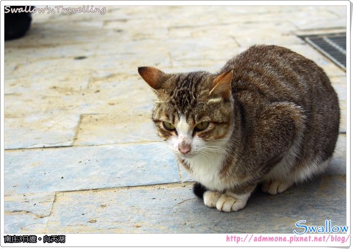 21_路邊親人的小貓咪