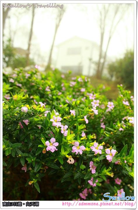 19_民宿前的野花