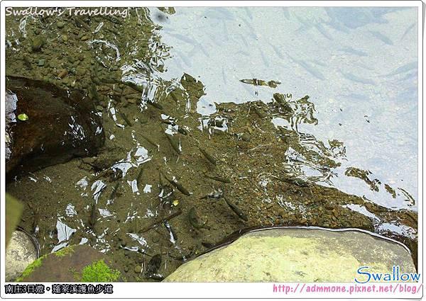 19_水中的魚群