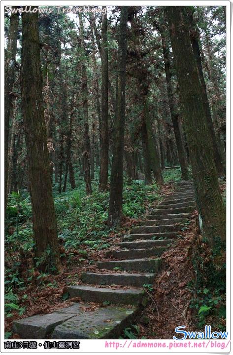 11_原始林景觀
