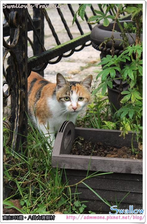 12_有點怕生的貓