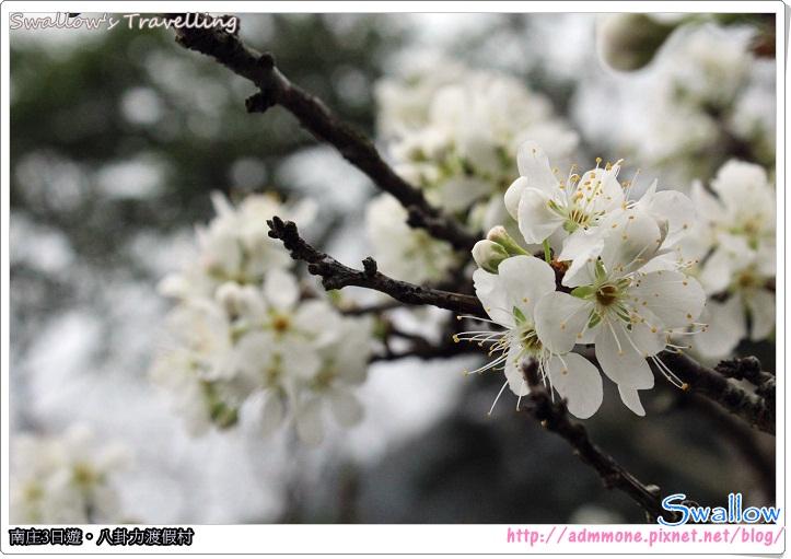 19_李花