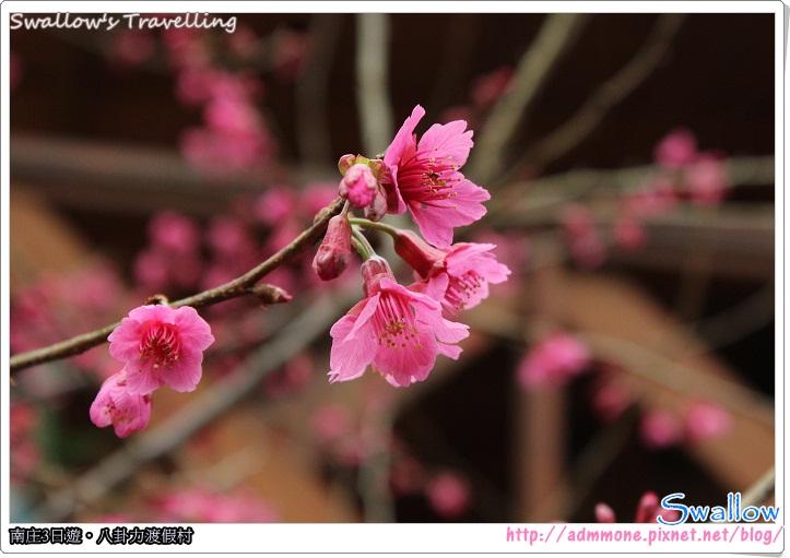 23_櫻花