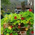 04_鮮豔的花兒