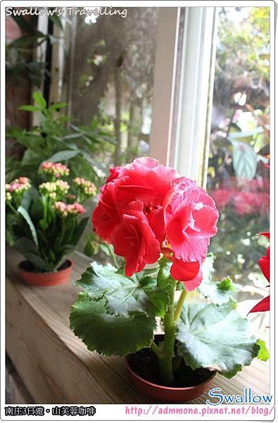 28_窗檯小花