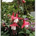 53_美麗的花朵