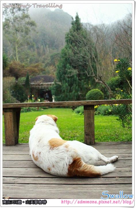 56_享受庭院之美的狗