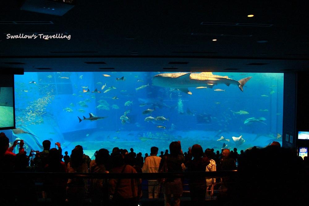 29_沖繩美麗海水族館