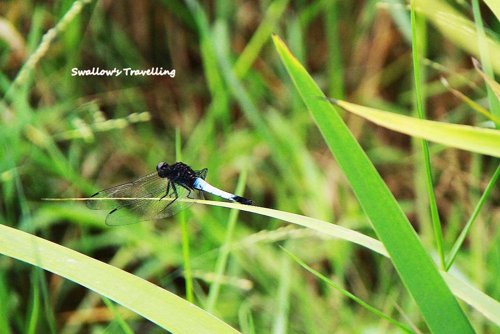 05_蜻蜓