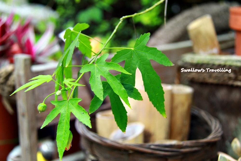 33_綠葉