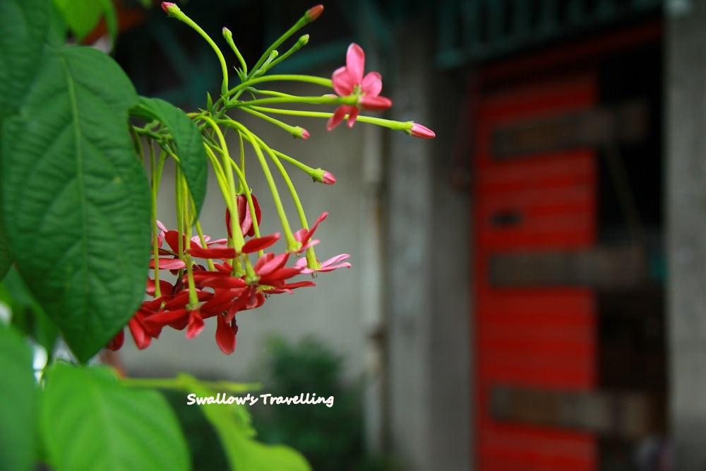 07_街角的花兒.jpg