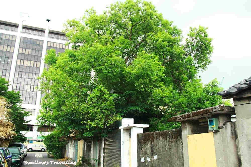 12_茂密的大樹.jpg