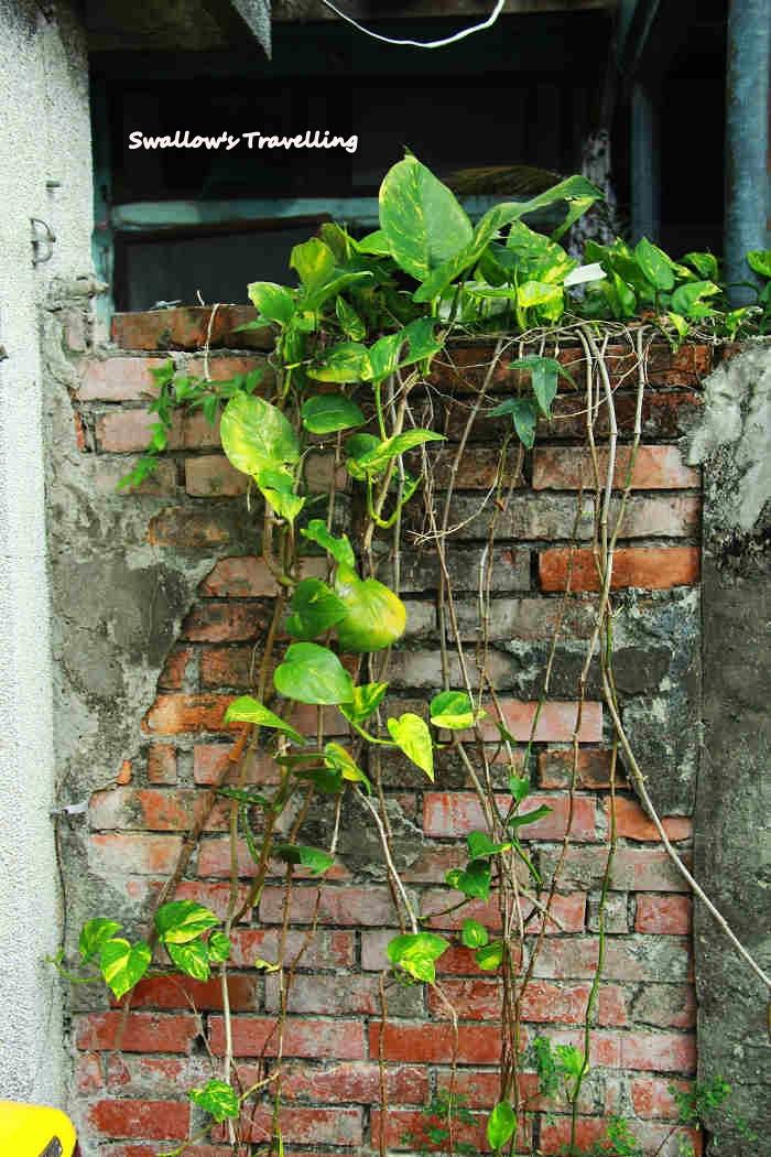 17_廢棄屋前生生不息的植物.jpg