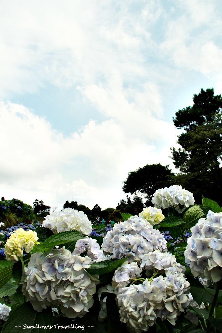 23_藍天.jpg
