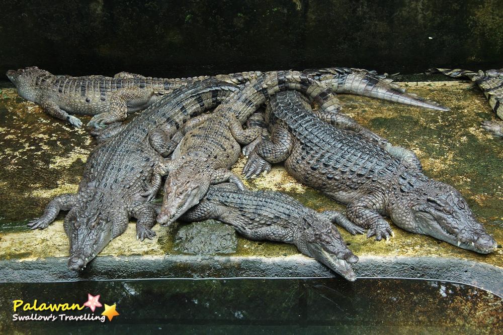 05_鱷魚養殖場.jpg