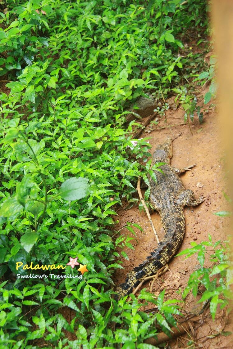 06_鱷魚.jpg
