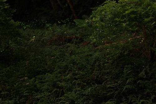150422和美山螢火蟲3.jpg
