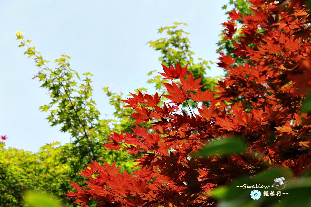 33_楓葉.jpg
