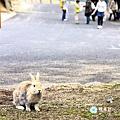 33_兔兔島.jpg