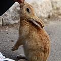 10_餵兔兔.jpg