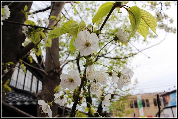 22_64_外人坡的花.jpg