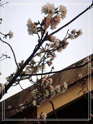 菁山休憩中心_15.jpg