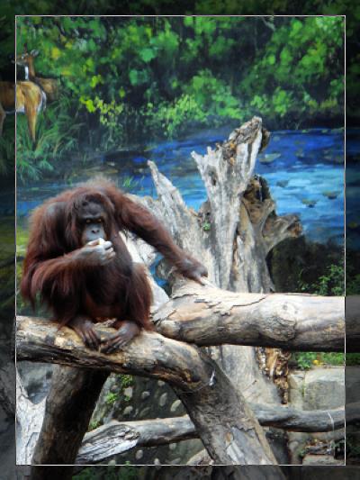 動物園_1.jpg