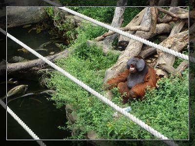 動物園_4.jpg