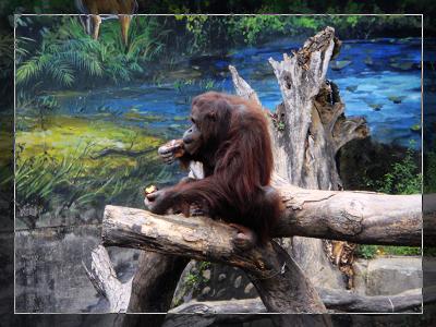 動物園_8.jpg