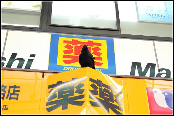 06_狸小路購物_01.jpg