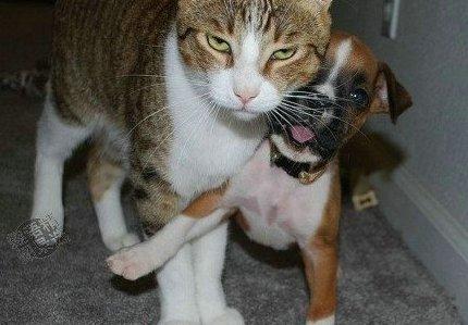 貓哥熄怒這種小事我來就好.jpg