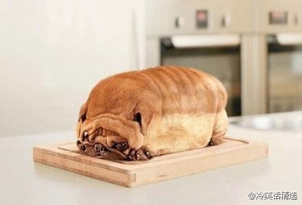 偶不素麵包!我在秤體重.jpg