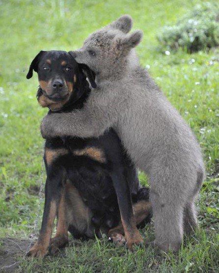 要知道熊抱的真正意思.jpg